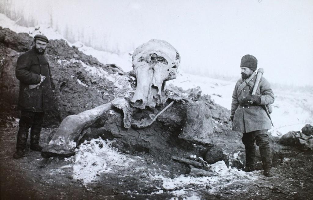 1901_egy_mamut_maradvanyai_koliman_a_berezovszkaja-folyo_menten.jpeg
