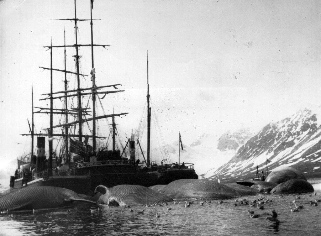 1905_norveg_balnavadaszhajok_zsakmanyaikkal_a_spitzbergakon.jpeg