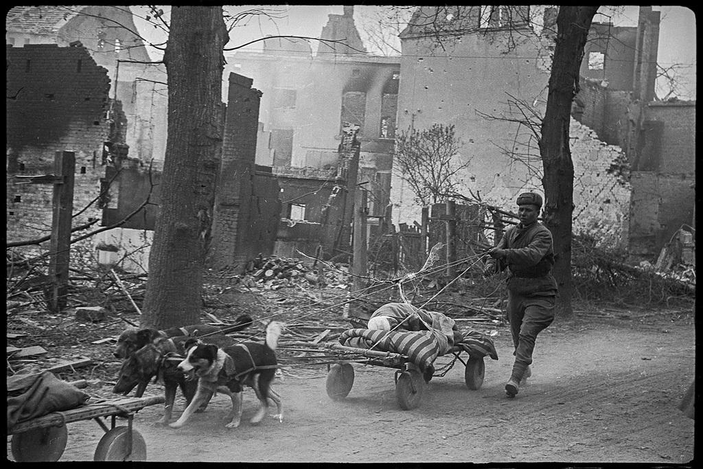 1945_aprilis_kutyak_altal_huzott_kocsin_szallitjak_a_sebesultet_a_nemet_seelow_varosaban_a_szovjet_tamadas_idejen.jpeg