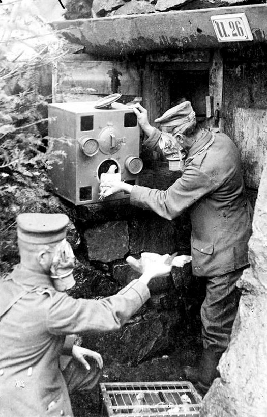 1918_german_soldiers_in_gas_masks_placing_carrier_pigeons_into_a_gas-proof_chamber_ww1.jpg