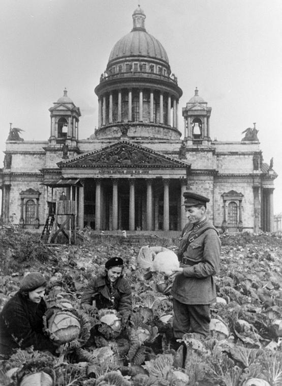 1942_kaposzta_a_kertben_a_szent_izsak_szekesegyhaz_1942_leningrad.jpeg
