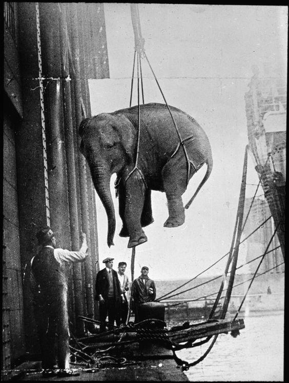 1930-as_evek_eleje_cirkuszi_elefant_erkezett_hajon_newcastle_upon_tyne-ba_anglia.jpg
