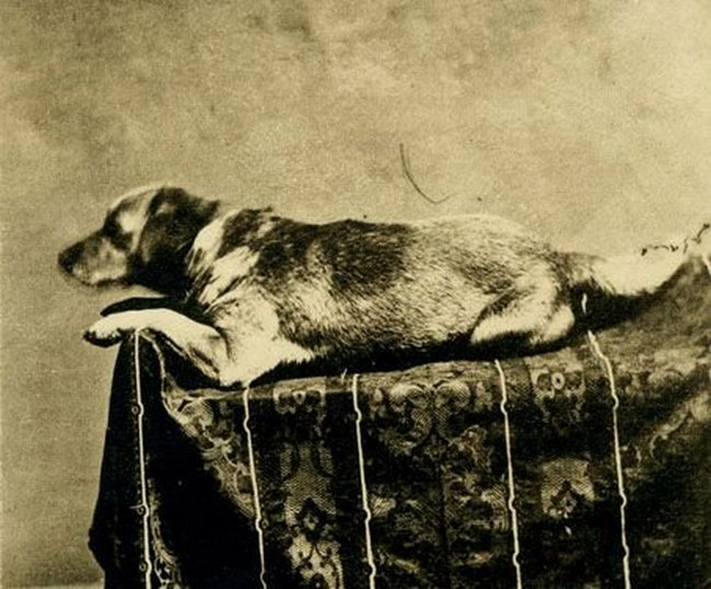 1861_abraham_lincoln_s_beloved_mutt_fido_the_first_presidential_dog_to_be_photographed.jpg