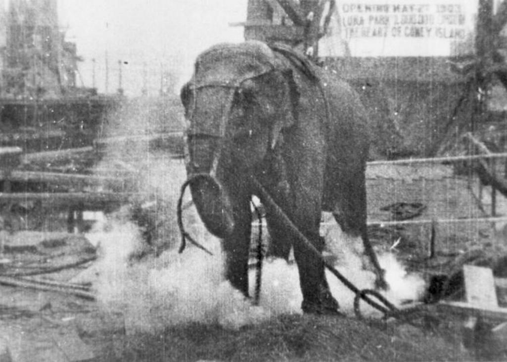 1903_edison_s_elephant_topsy_electrocuted.jpg