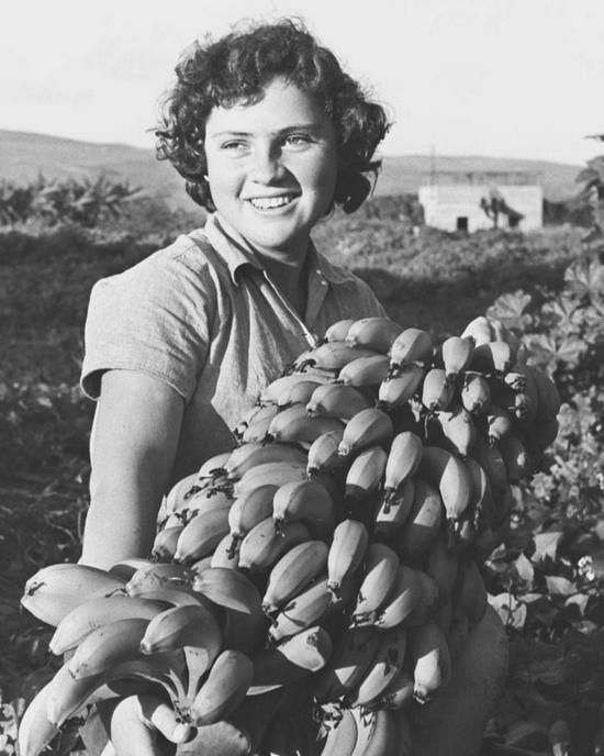 1956_banan_szedese_a_kibbutz_ginosarban_1956_izrael.jpeg