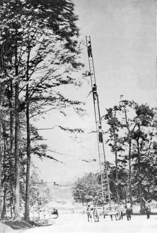1869_tree_pruning_prospect_park_brooklyn_ny.jpg