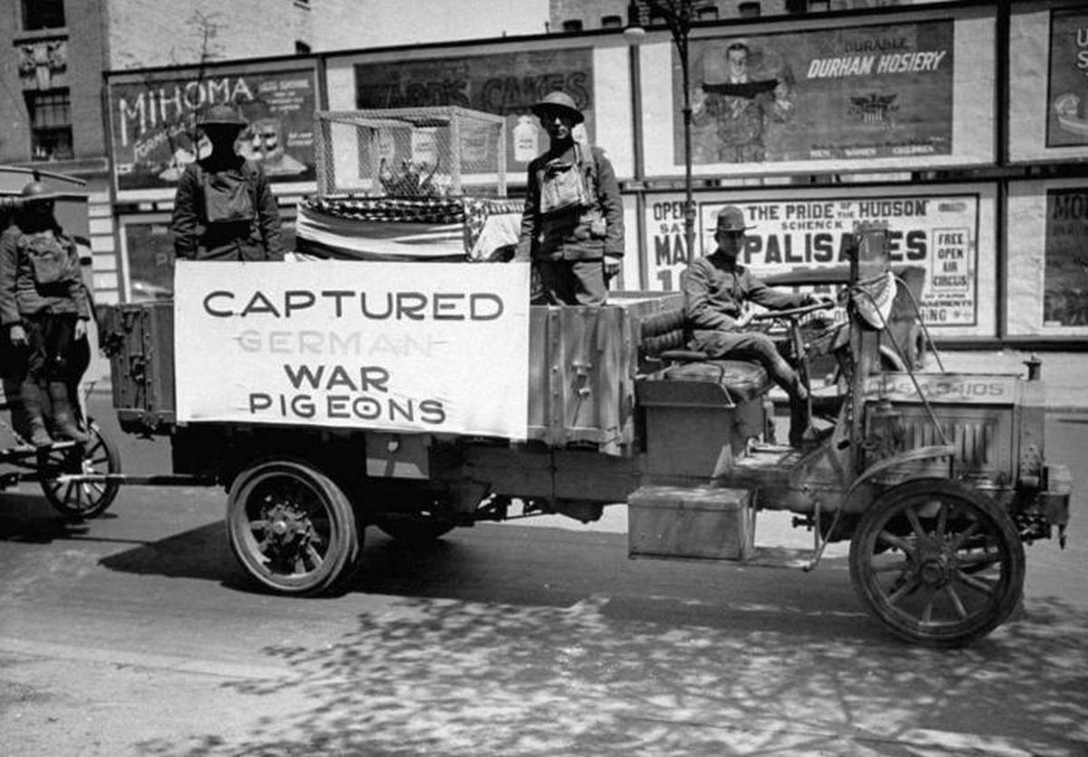 1919_wwi_war_pigeons.jpeg