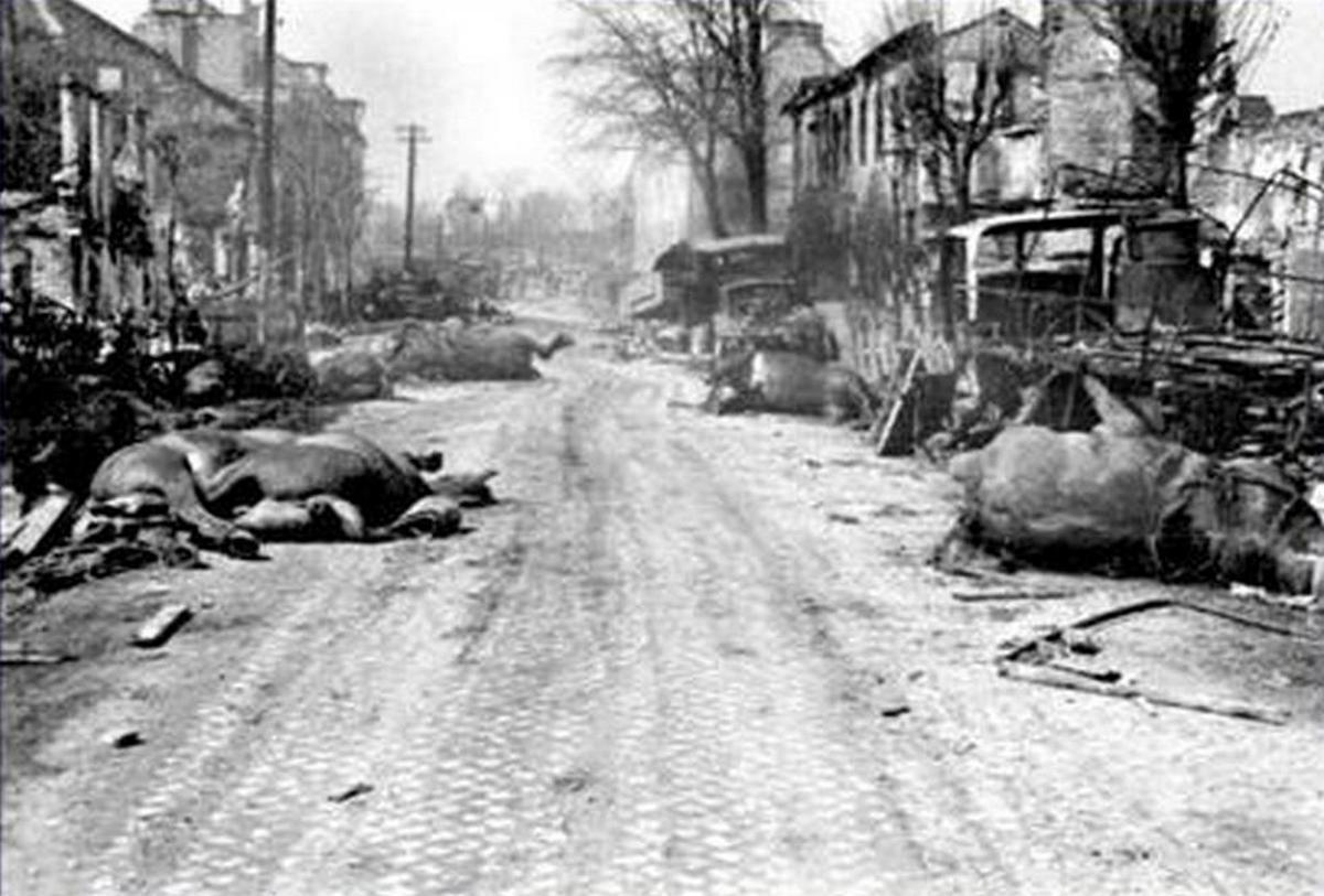 1945_majus_escaped_animals_killed_on_the_streets_of_berlin.jpg
