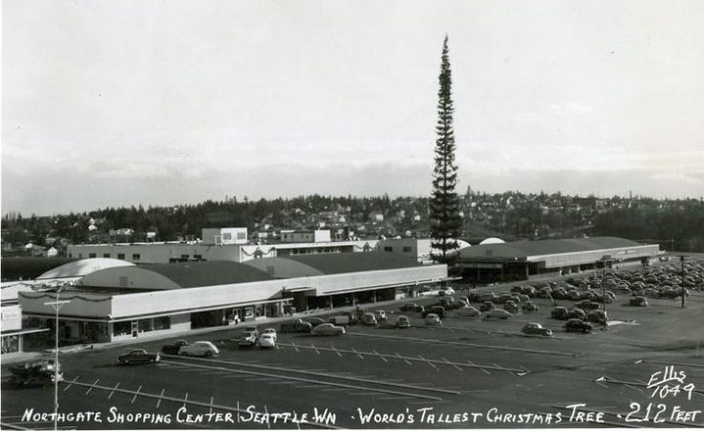 1950_tallest_christmas_tree.jpg