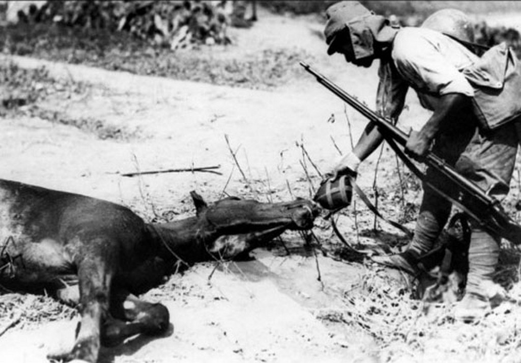 1937_a_japanese_army_soldier_gives_a_dying_horse_a_drink_of_water_from_his_canteen_during_the_opening_stages_of_the_battle_of_shanghai.jpg