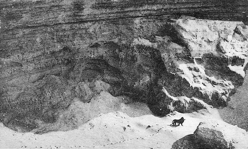 1922_the_last_wild_barbary_lion_in_the_atlas_mountains.png