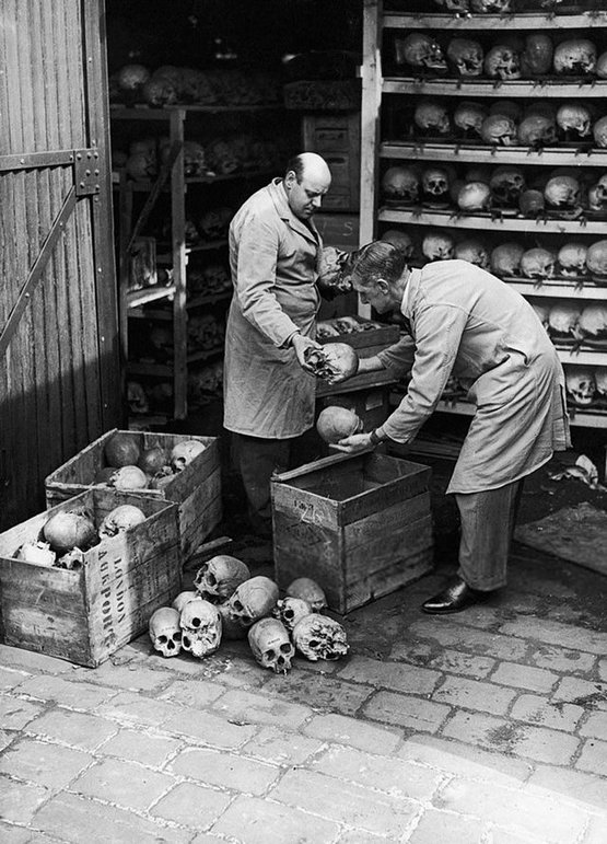 1948_attendants_from_the_royal_college_of_surgeons_packing_up_human_skulls_to_send_to_the_natural_history_museum_london_england.jpg