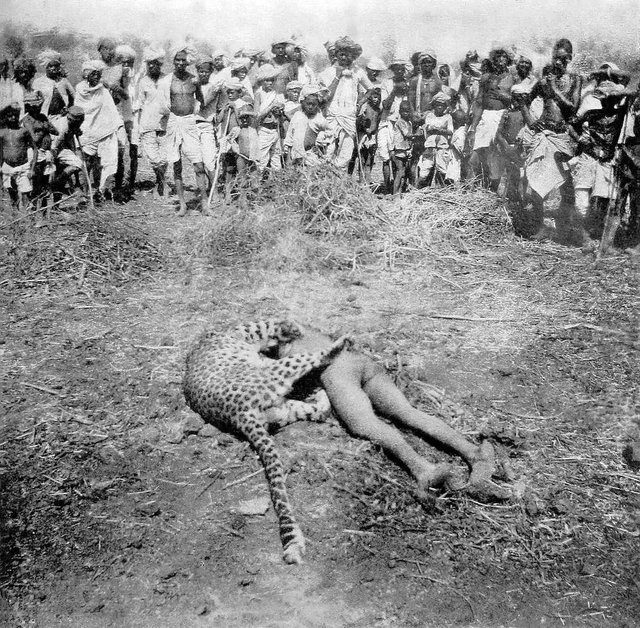 1901_the_gunsore_leopard_after_it_was_shot_by_british_officer_w_a_conduitt_credited_with_at_least_20_human_deaths_the_leopard_was_killed_on_top_of_its_last_victim_a_child_from_somnapur_india.jpg