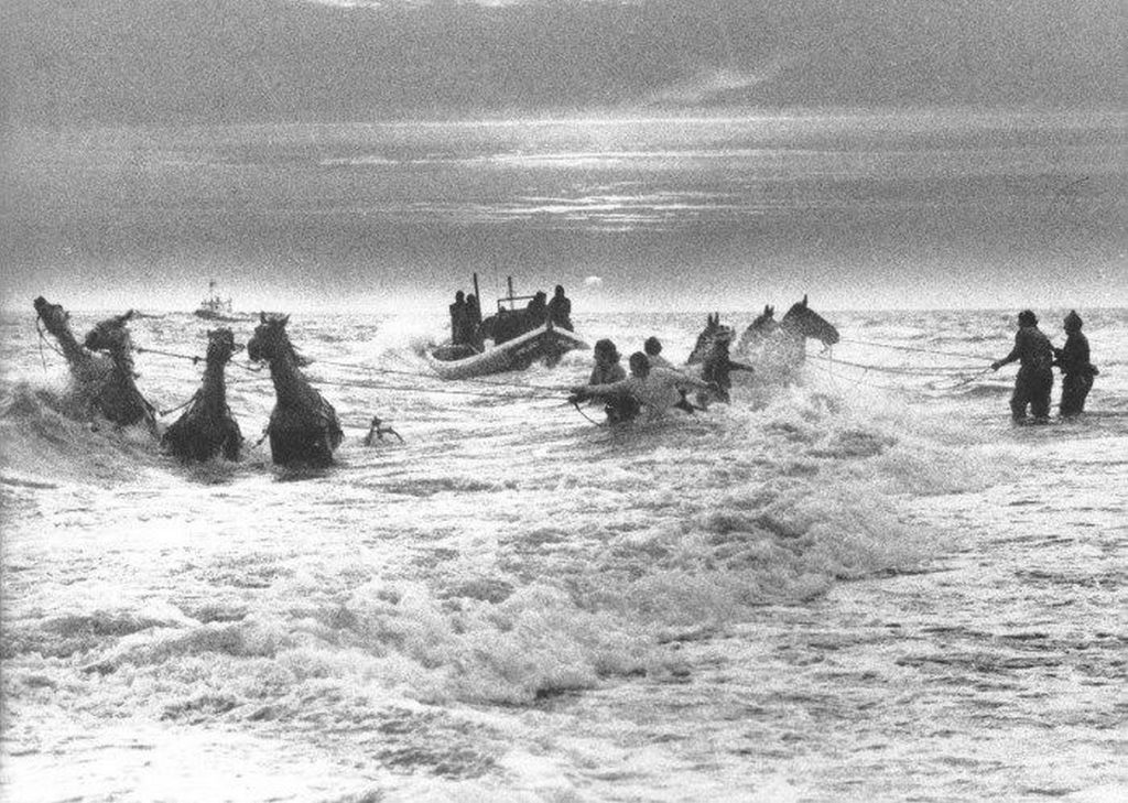 1977_ameland_hollandia_horses_struggle_to_reach_the_beach_after_having_launched_a_lifeboat_into_the_sea.jpg