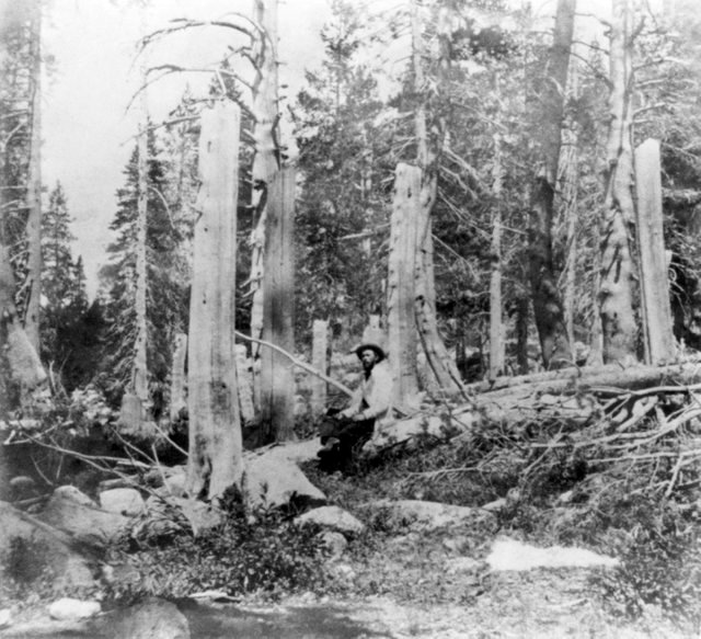 1866_stumps_of_trees_cut_at_the_alder_creek_site_by_members_of_the_donner_party_the_height_of_the_stumps_indicates_the_depth_of_snow.jpg
