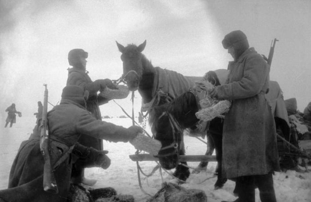 1942_szovjet_katonak_a_nemetek_szalmabol_font_labbelijevel_etetik_lovaikat.jpeg