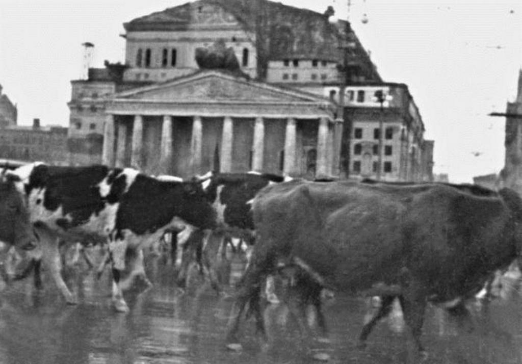1941_tehencsorda_a_moszkvai_balsoj_szinhaz_elotti_teren_az_epulet_tetejen_meg_lathato_a_bombazasok_elleni_alca.jpeg