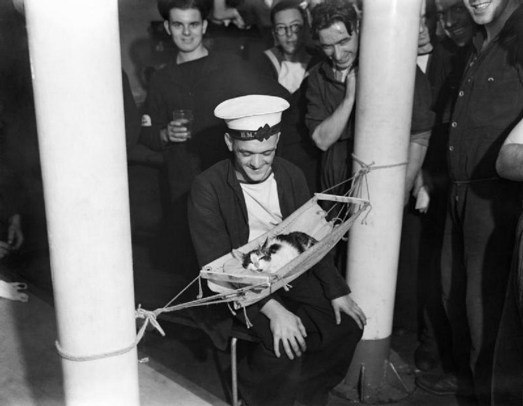 1941_convoy_the_cat_asleep_in_a_hammock_aboard_hms_hermione.jpg