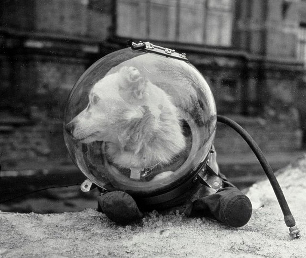 1960_belka_a_soviet_dog_who_went_to_space_in_the_sputnik_5_she_returned_to_earth_safely.jpg