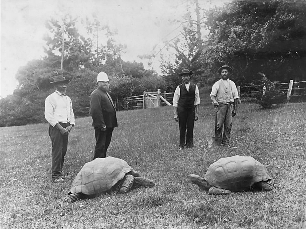 1886_st_helena_jonathan_the_tortoise_the_giant_tortoise_on_the_left_as_photographed_in_1886_jonathan_is_alive_even_today_and_is_presently_186-187_years_old.png