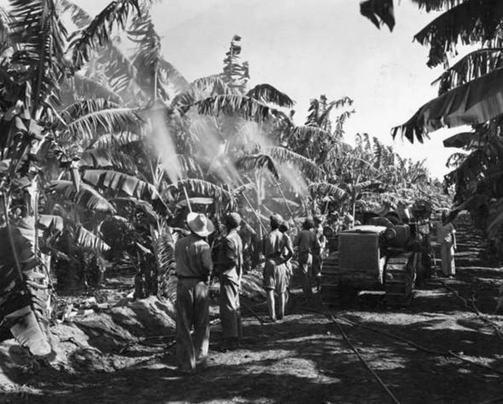 1950_plantations_workers_spray_the_banana_trees_to_protect_from_disease_in_the_dominican_republic.jpg