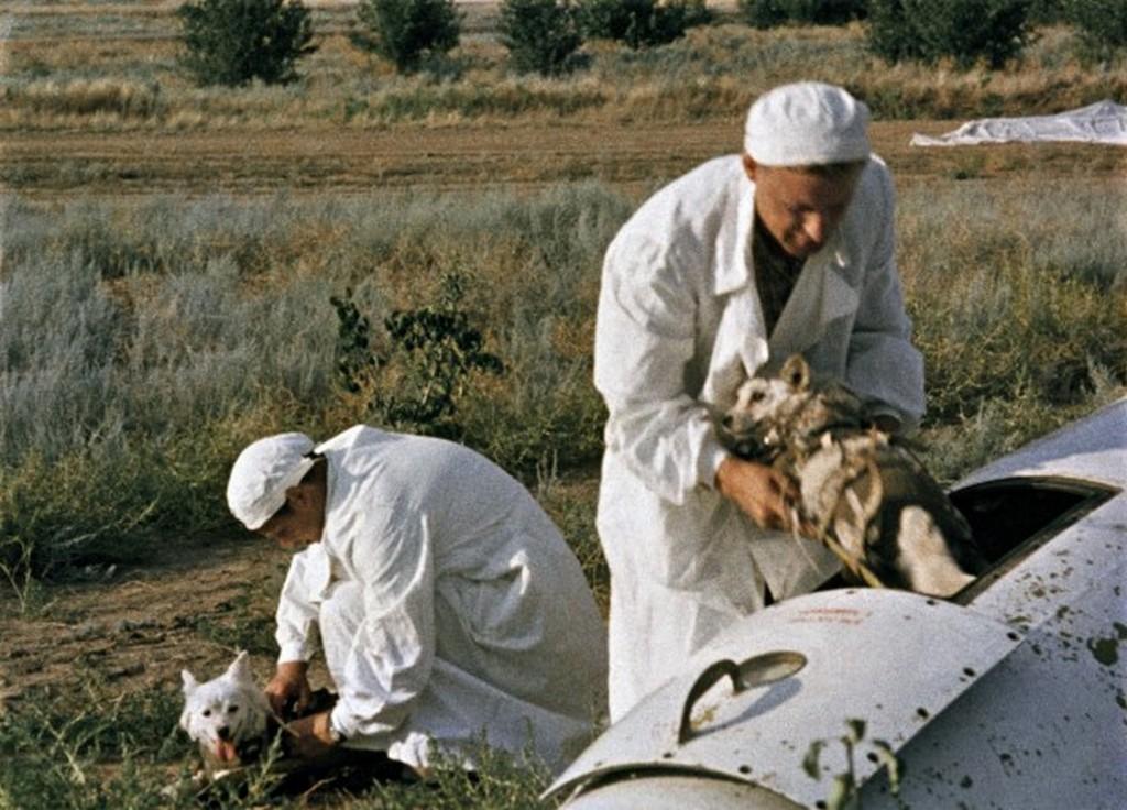 1960_augusztus_20_belka_es_sztrelka_az_elso_epsegben_visszatert_urhajos_kutyak_a_szovjetunioban.jpg