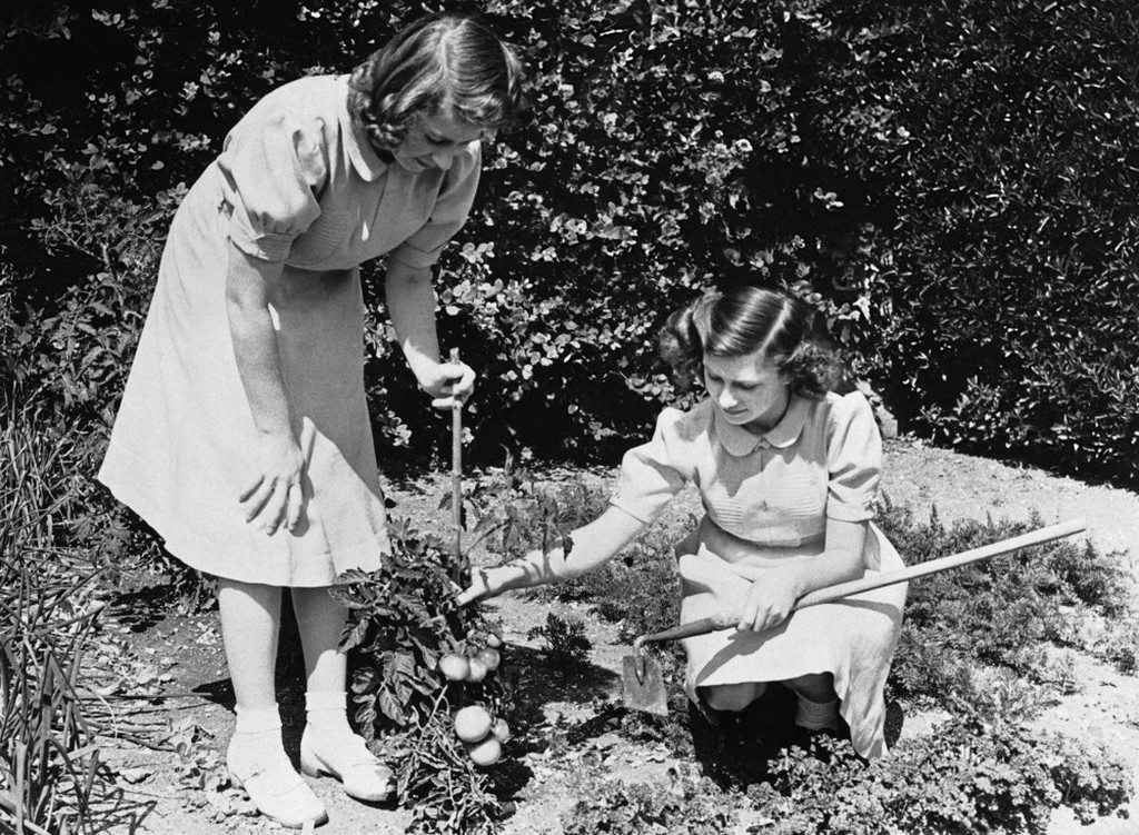 1943_princesses_elizabeth_left_and_margaret_rose_right_inspect_tomatoes_which_they_have_grown_in_their_own_garden.jpeg