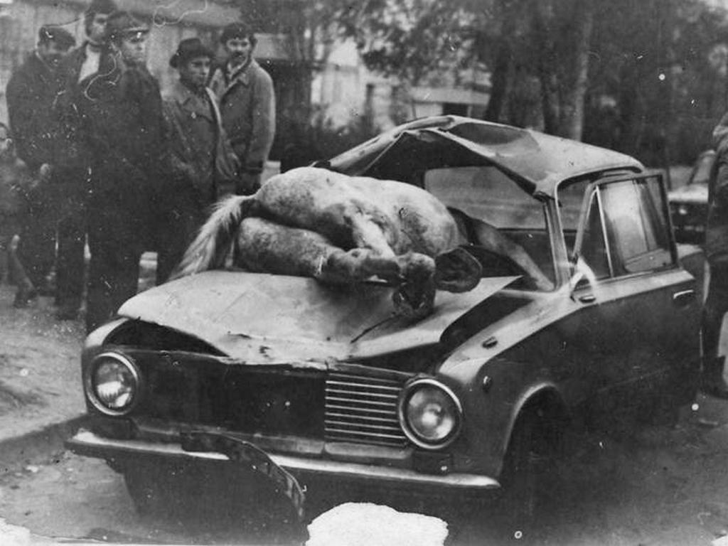 1982_baleset_egy_loval_zaporozsje.jpeg