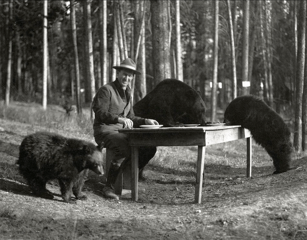 1924_horace_marden_albright_superintendent_of_yellowstone_national_park_during_the_1920s_sits_at_a_table_with_three_bears.png