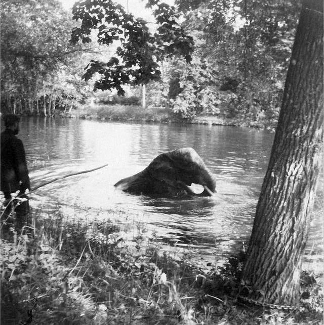 1910_nicholas_ii_watching_the_romanov_family_pet_elephant_bathe_in_a_pond_at_tsarskoe_selo.jpg