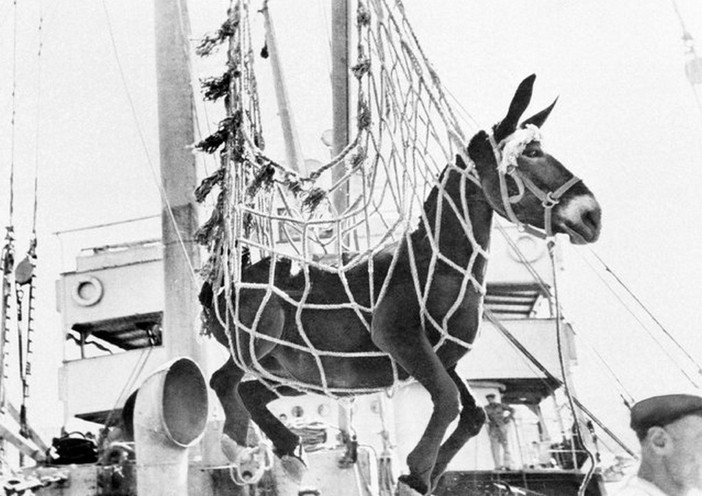 1945_oktober_one_several_hundred_mules_being_delivered_to_greece_by_the_unrra_is_swung_from_a_ship_to_a_dock_at_a_port_in_greece.jpg