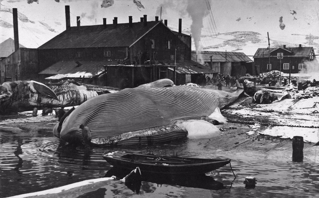 1917_balnavadaszati_allomas_del-georgia_szigeten_antarktisz_kozeleben.jpg