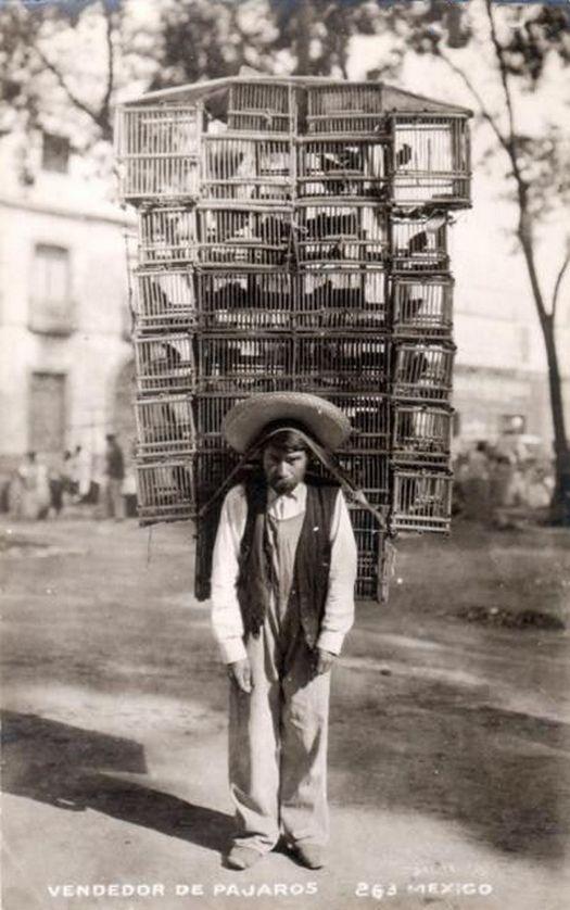 1903_mexikoi_madararus_1.jpg