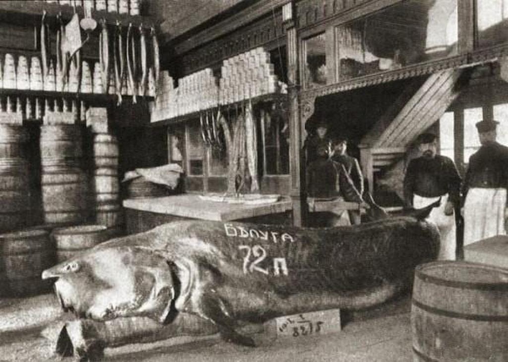 1910-es_evek_a_kaszpi-tengerben_fogott_1152_kilos_viza.jpg