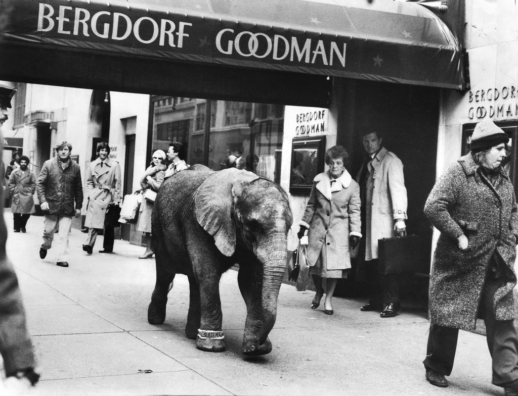 1980_new_york_passers-by_hurried_rulers_of_the_sidewalks_had_to_be_instructed_to_notice_the_elephant_in_their_midst_please_keep_walking_and_react_to_the_elephant_the_film_director_plead.jpg