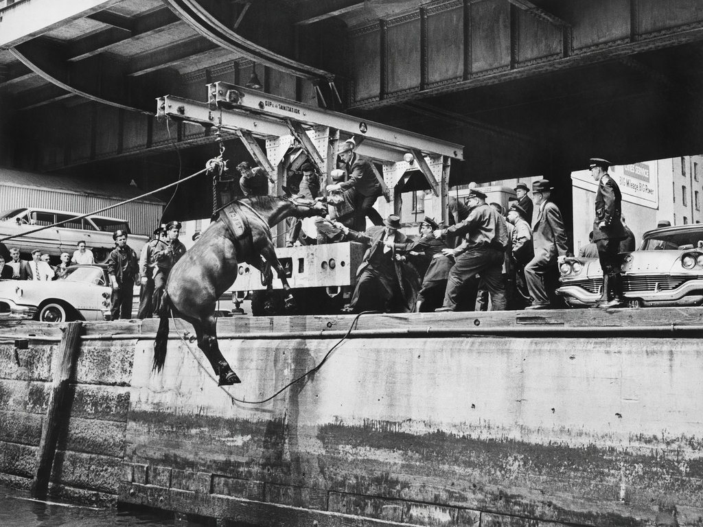1961_a_sudden_noise_panicked_poor_patrolhorse_cam_who_bolted_and_plunged_into_the_east_river.jpg