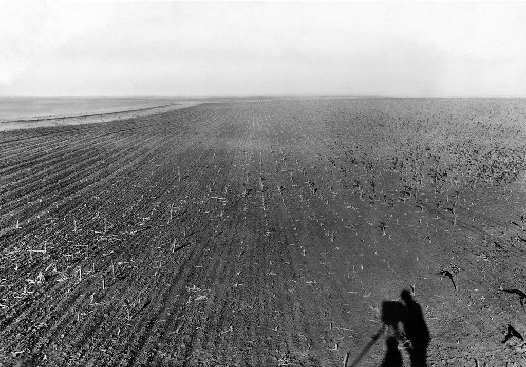1931_a_field_of_crops_ravaged_by_grasshoppers_in_the_great_plains_south_dakota.jpg