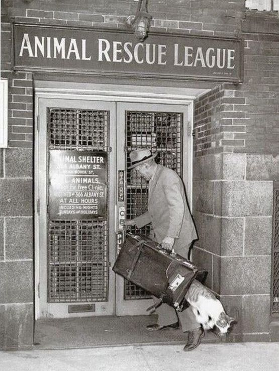 1940_a_cat_makes_a_great_escape_from_the_animal_rescue_league_of_boston_cr.jpg