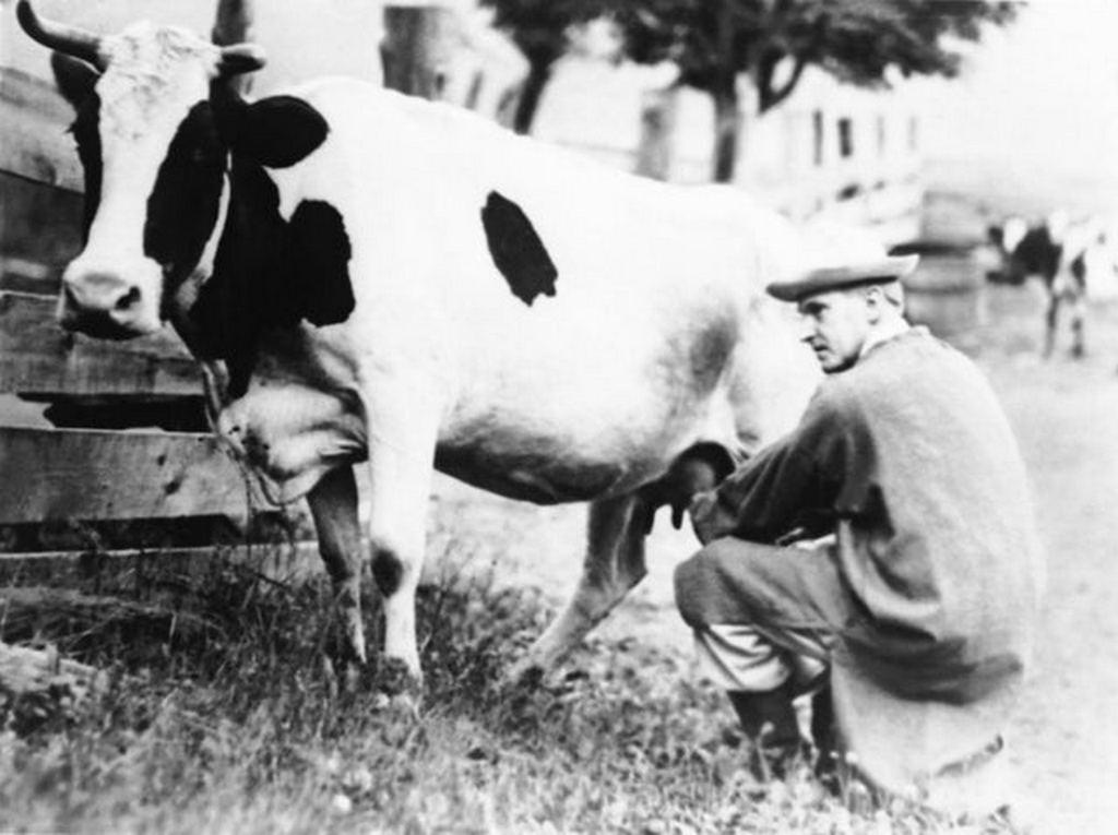 1920_calvin_coolidge_kesobbi_amerikai_elnok_ekkor_meg_massachussetts_kormanyzoja_tehenet_fej_csaladi_farmjukon.jpg