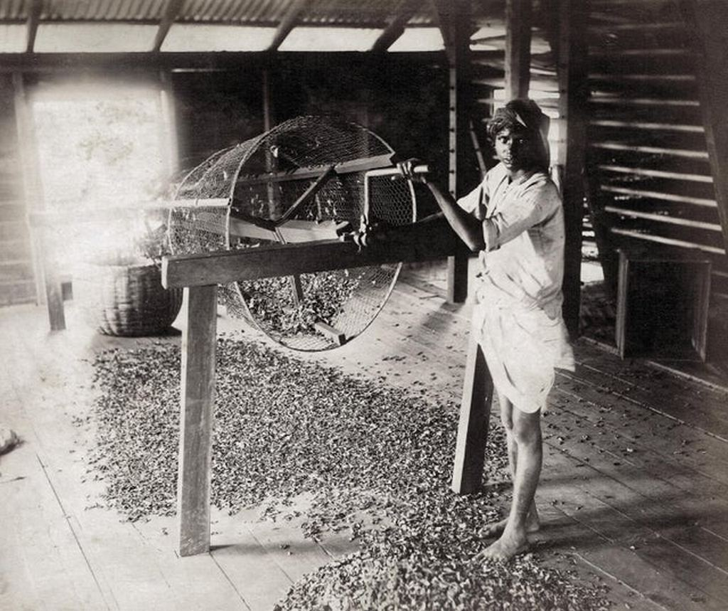 1890_korul_sorting_tea_in_ceylon_sri_lanka.jpg