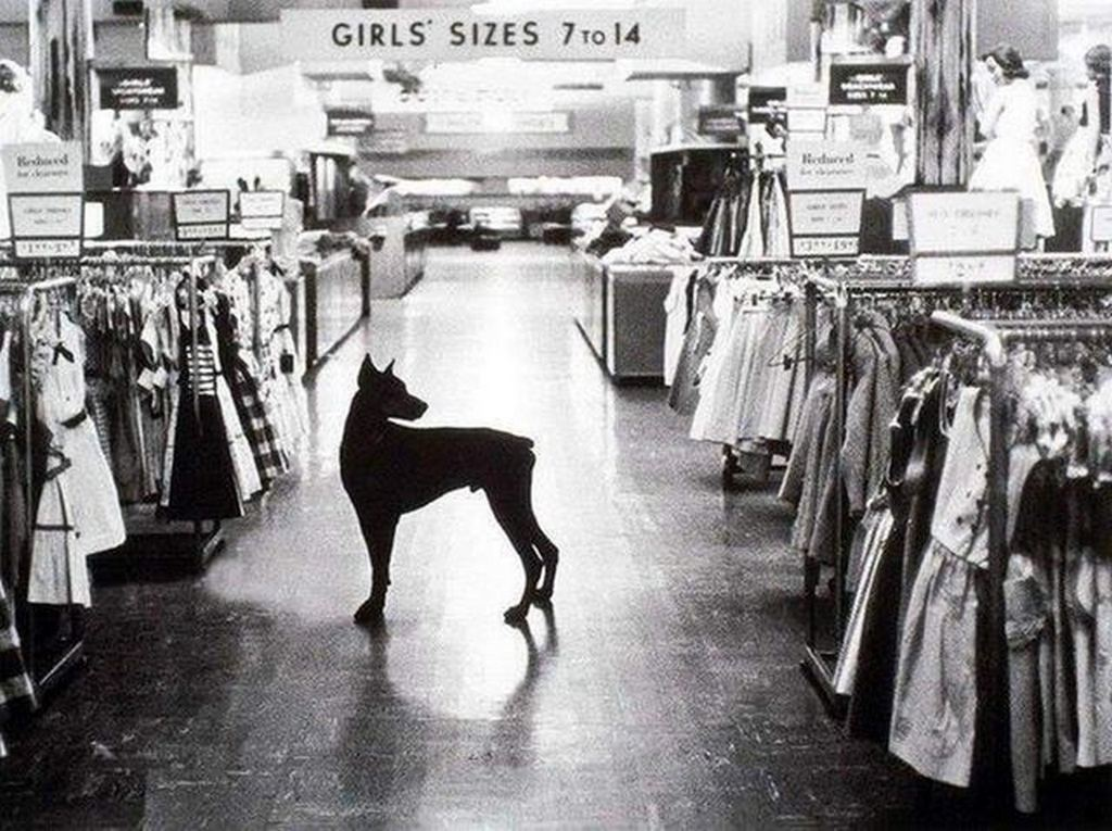 1954_the_night_watchdog_on_duty_at_a_macy_s_department_store_in_new_york_city.jpg