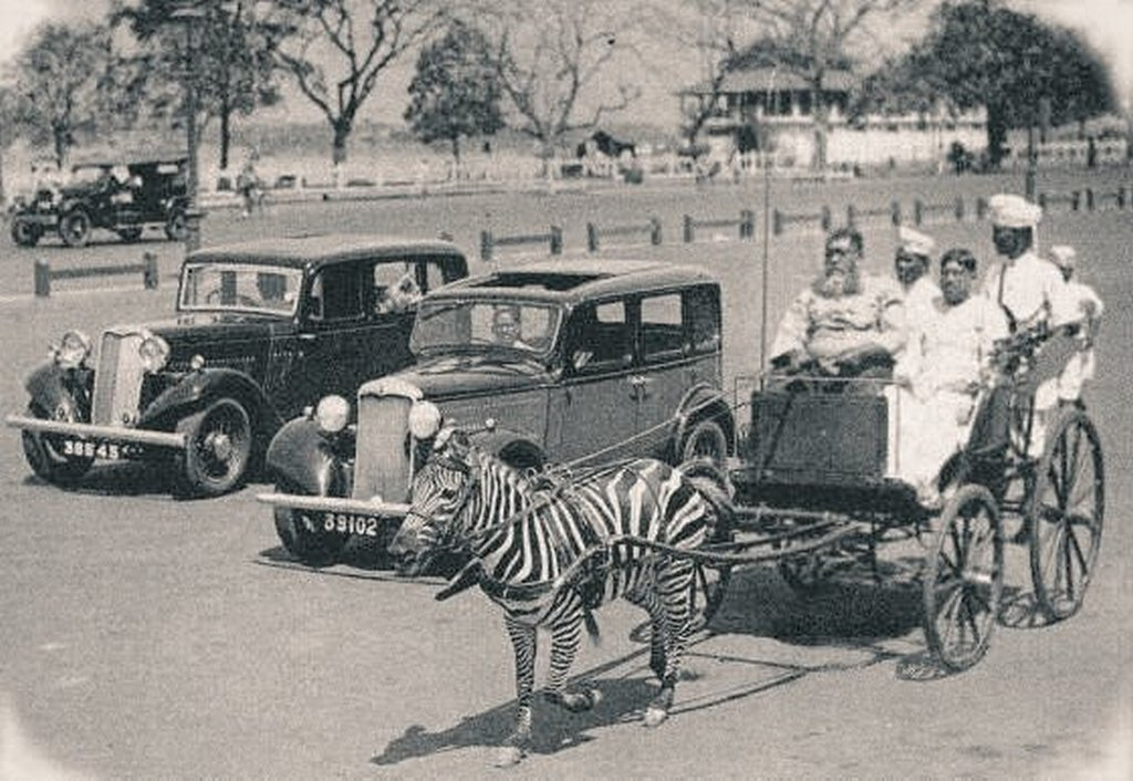1930s_a_zebra_cart_in_calcutta_india2.jpg
