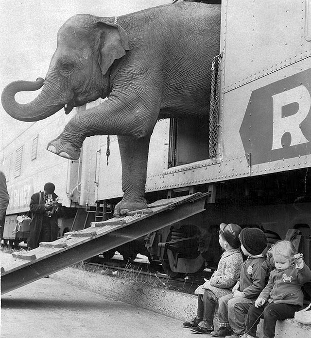 1963_targa_the_elephant_disembarks_from_the_ringling_bros_barnum_and_bailey_train_in_the_bronx.jpg