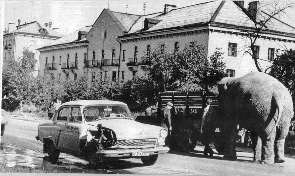 1971_elefant_es_volga_1971_arhangelszk_szovjetunio.jpeg