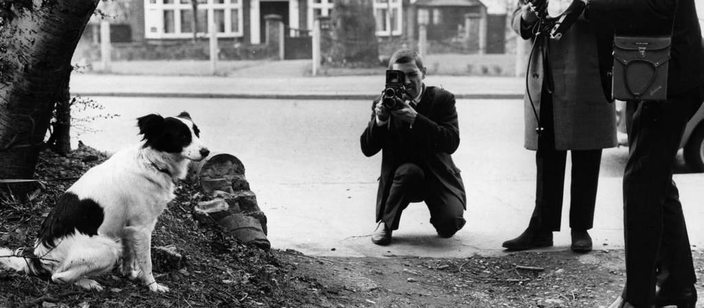 1966_a_dog_named_pickles_found_the_stolen_fifa_world_cup_when_out_for_a_walk_with_his_owner_in_south_london.jpg