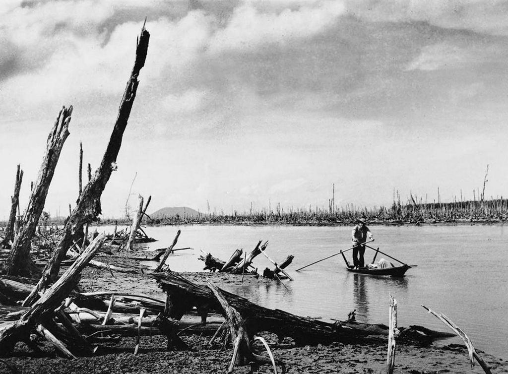 1970_a_mangrove_forest_defoliated_by_agent_orange_vietnam.jpg
