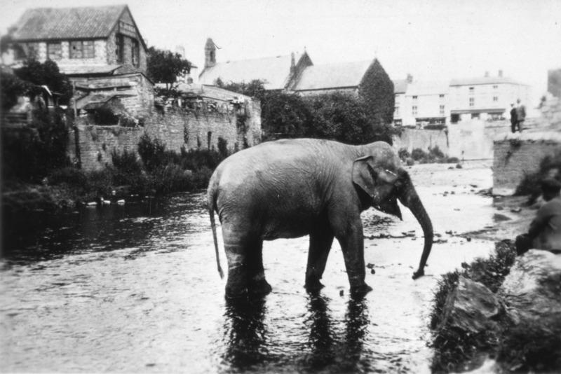 1939. Szökött cirkuszi elefánt Wales-ben..jpg