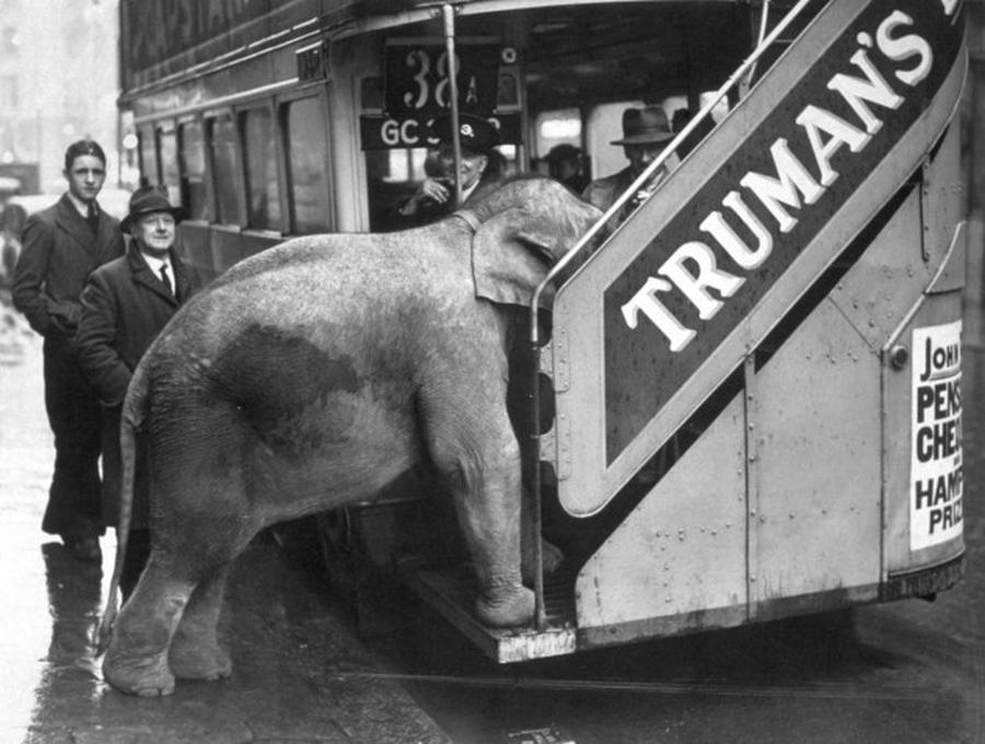 1941. A Chessingtoni cirkusz elefántja Comet próbál buszra szállni a Shaftesbury Avenue-n..jpg