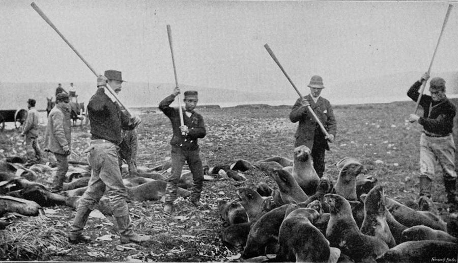 1895_fokavadaszat_alaszkaban.jpg