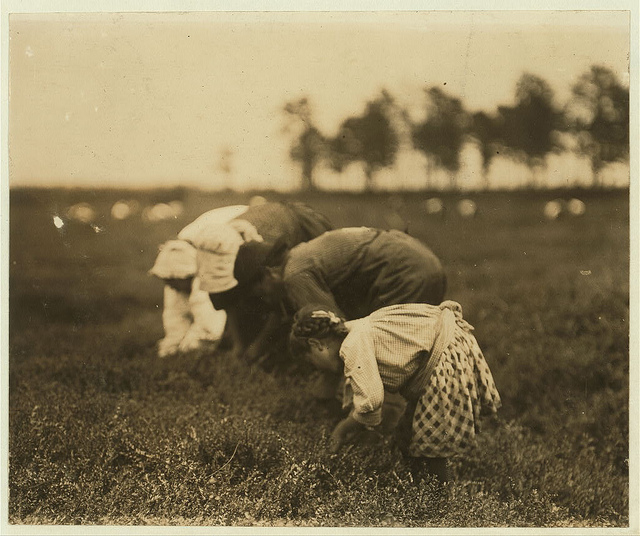 Old Photos of Child Labor between 1908 and 1924 (7).jpg